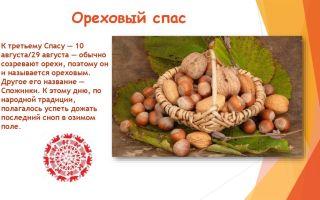 Третий спас ‒ ореховый спас: 13 фактов из истории праздника