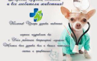 13 идей поздравлений и подарков для ветеринара к профессиональному празднику и в благодарность